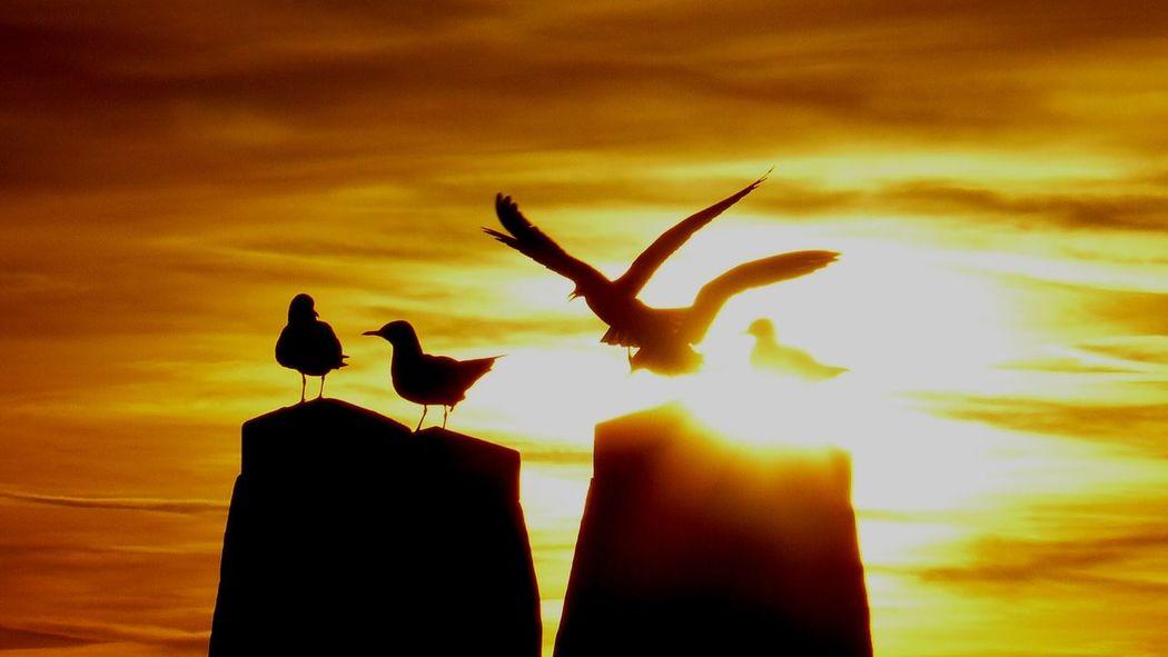 Bird Silhouette Sky
