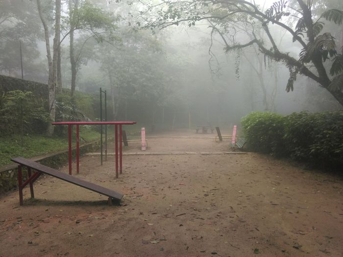 Jungle Landscape Mist Nature Non-urban Scene Ominous Outdoors Park Tijuca's Forest Tranquil Scene Tranquility