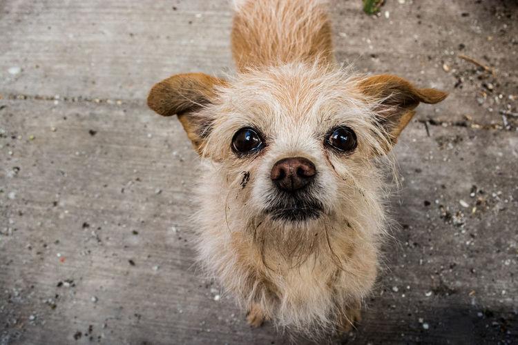 High angle portrait of stray dog on footpath
