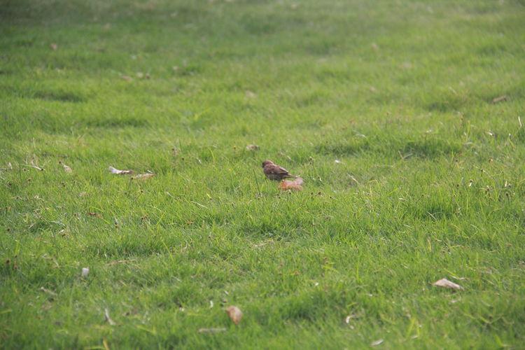 bird and grass