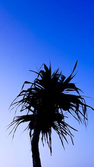 tree Tree Palm