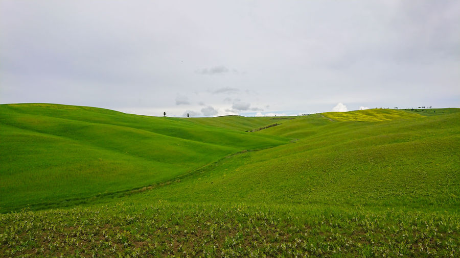 Beautiful spring minimalistic landscape with green hills in Tuscany countryside, Italy Tuscany Italy Hill Fog Landscape Countryside Field Nature Green Rural Tuscan Toscana Italian Farm Meadow Summer Scenery Spring Tree Sky Agriculture Beauty Sunrise View Idyllic Sunny Scenic Travel Villa Agriturismo Italia Peaceful Picturesque Scenics Country Cypress Farmland Tourism Sunset Amazing Copy Space Copy-space Copyspace Horizontal Nobody Minimalistic Minimalism Italian Cypress Cupressus Sempervirens Scenics - Nature