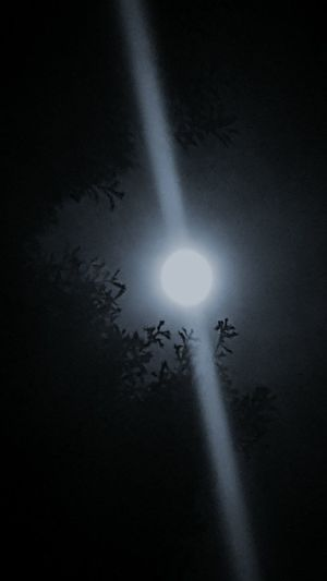 Moon Shots Moon Through The Trees Night Dark Louisiana Skies Shades Of Grey Eye Of Ky