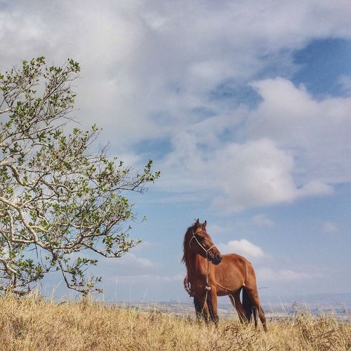 Horse Alone Standing Animals Wild Animal INDONESIA IPhoneography