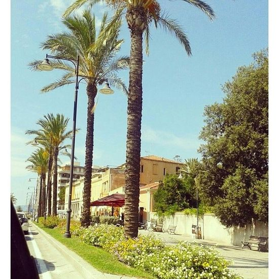 OlbiaCorso Comune Sardegna Sardinia beauty fiorigoodday beautiful beautifulday ♡