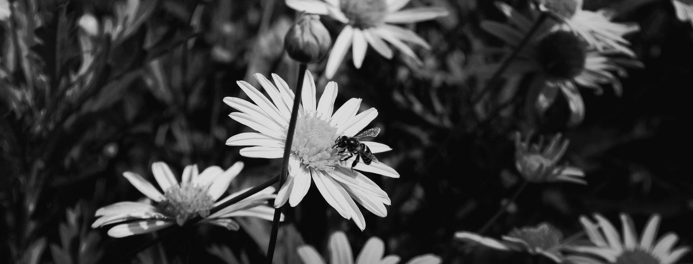 Flower Blackandwhite Nature