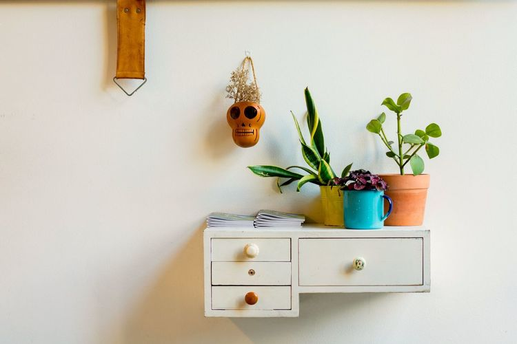 Plant Potted Plant Indoors  Home Interior No People Flower Nature Cabinet Home Showcase Interior Clock Day Sugarskull Mexico Mexican Skull Shelf Interior Sunlight Eclectic Scandinavian Cool Barcelona Plant Design Inspirations Art Is Everywhere
