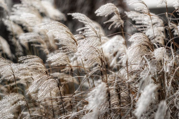 Close-up of dried plants on field