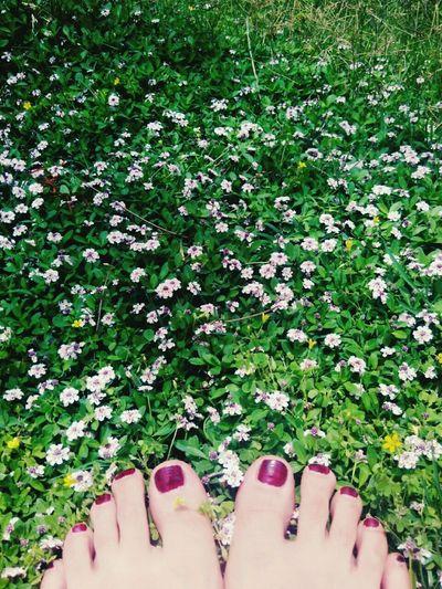 脚 鲜花草地 周六心情
