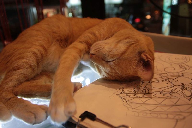 Always Be Cozy Enjoy The New Normal Cat Domestic Cat Relaxation One Animal Cute Dreaming