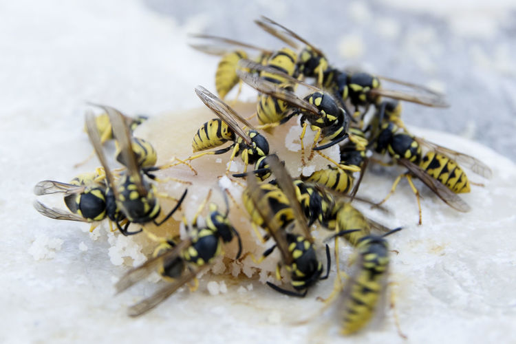 High angle view of wasps on sweet food