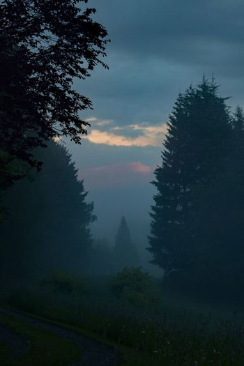 4am Badfocus Germany Good Morning Morningfog Nature Summer Trees