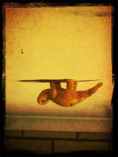 Hanging Out Dinosaur!!