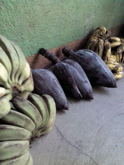 saging Philippines Fruit
