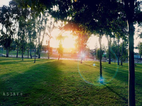 Evening scene in the neighborhood. Sunrise_sunsets_aroundworld Sunset Silhouettes Nature Trees And Sun