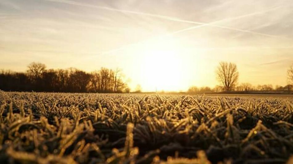 Farm Sunset Field Agriculture Landscape Tranquil Scene Rural Scene Outdoors Tree Scenics Sky Cloudporn Showcase December Autumn 2016 December 2016 First Touch Of Winter Sunlight The Places I've Been Today Winter Is Coming... How's The Weather Today? Beauty In Nature Silhouette Low Angle View Cold Temperature It Is Cold Outside