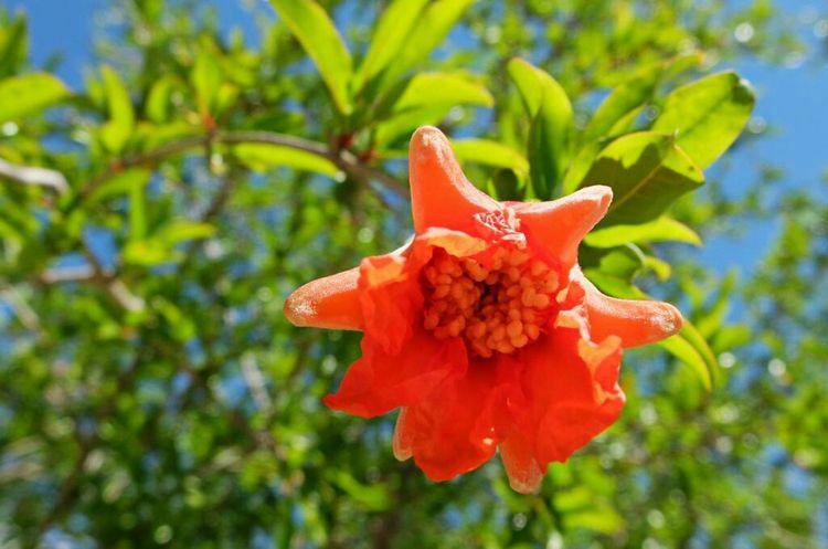 La rojos de granado. Relaxing Streamzoo Flowers Moments