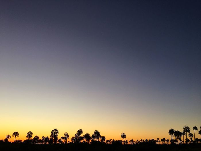 Tranquil Scene Tree Nature Beauty In Nature Tranquility Scenics Silhouette Sunset No People Outdoors Landscape Sky Day Popckorn Entre Rios Argentina Clear Sky Palm Tree Tree Cloud - Sky