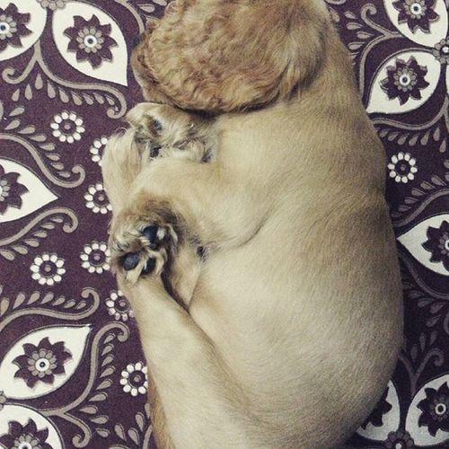 Ilovesleeping on dad's bed