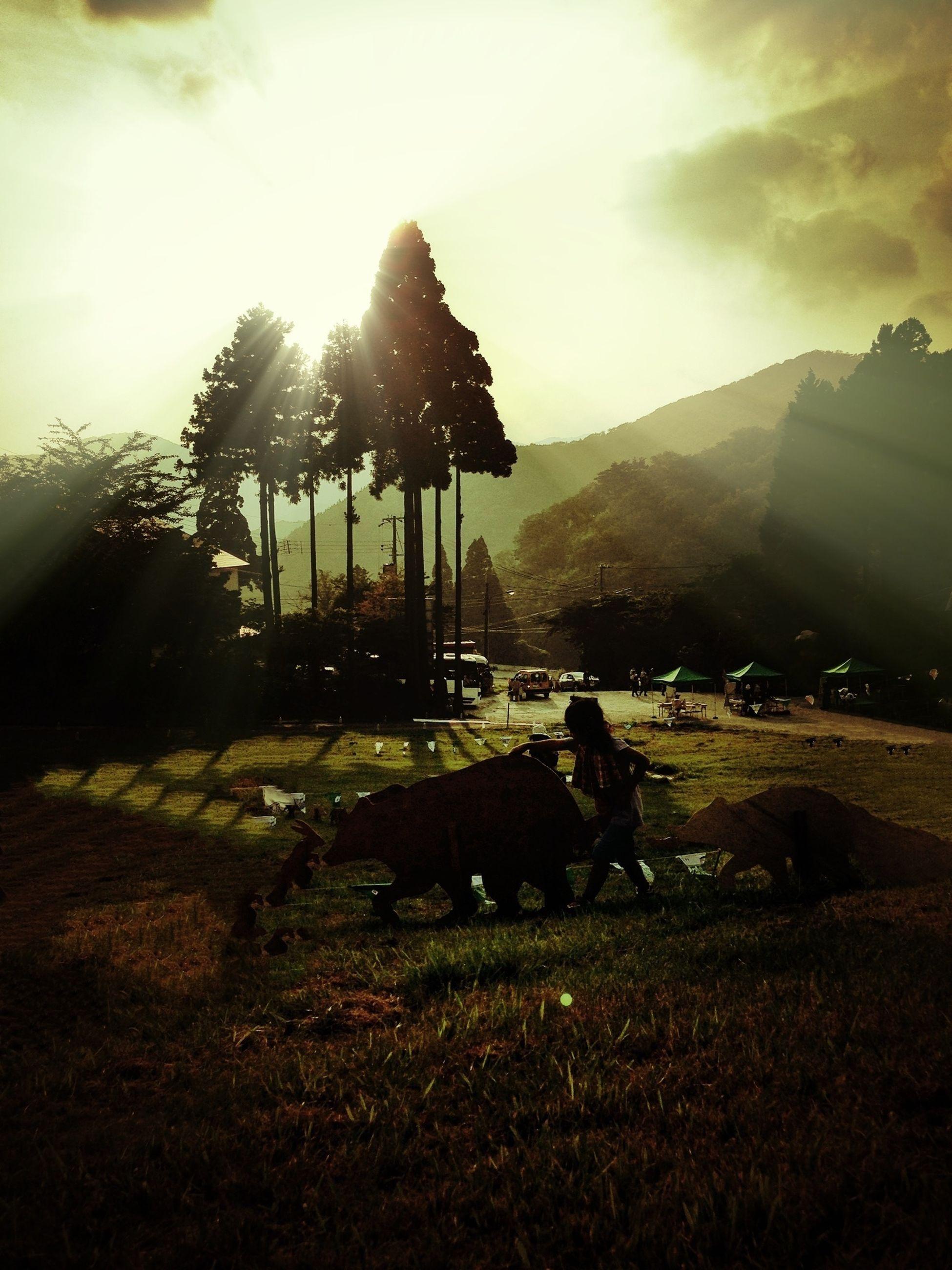 sky, grass, tree, field, sun, landscape, domestic animals, sunlight, mammal, pets, lens flare, cloud - sky, sunbeam, sitting, tranquility, nature, silhouette, grassy, dog, animal themes