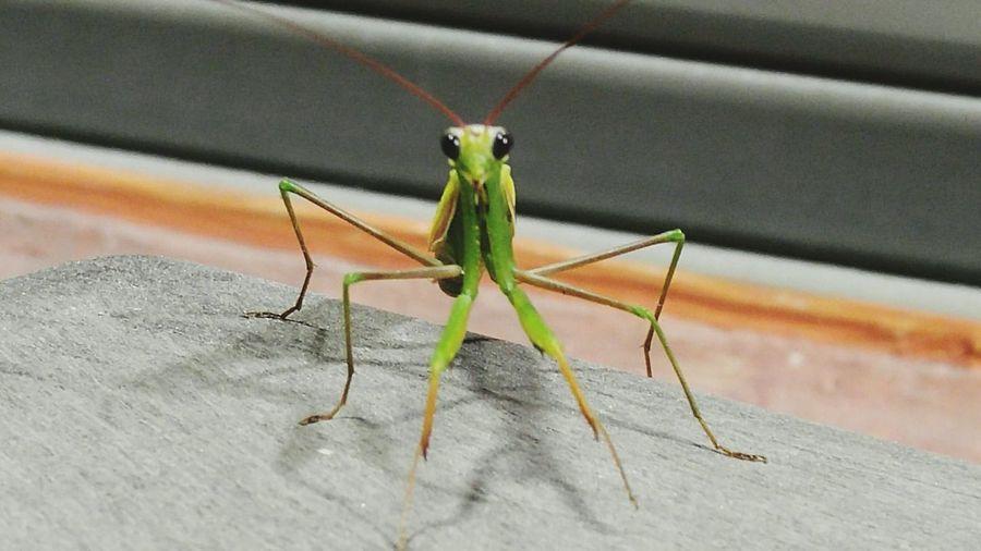 Learn & Shoot: Simplicity Praying Mantis Nature Photography Insect Photography Praying Praying Mantis