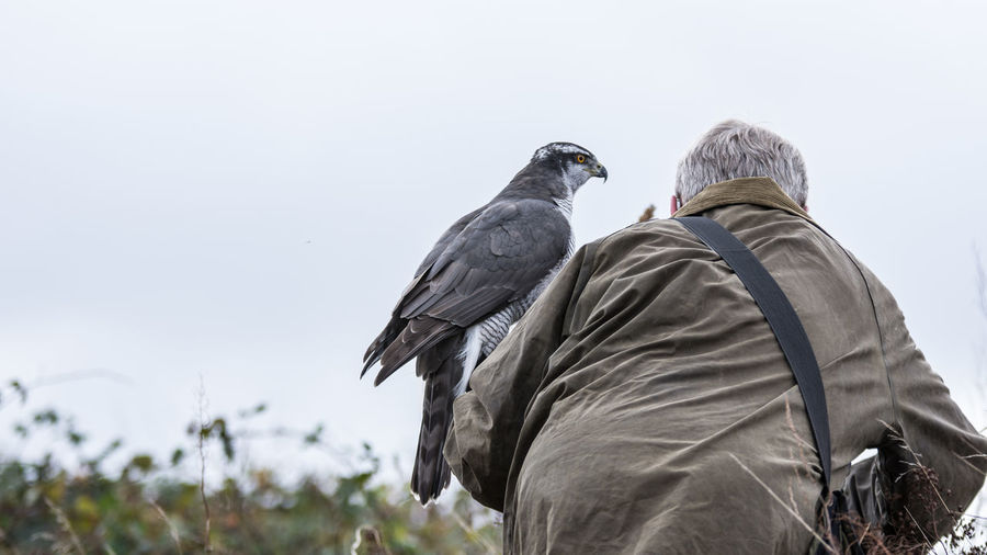 Animals In The Wild Bird Animal Wildlife Vertebrate Day Perching Rear View Sky Nature Group Of Animals Focus On Foreground Outdoors Clear Sky People Copy Space Low Angle View Pigeon Warm Clothing