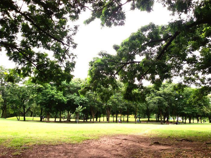Tree Green