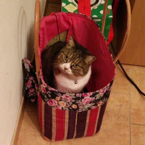 Bastet the shopping cat Cat Shopping Basket
