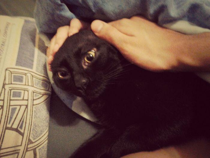Kitty ^__^