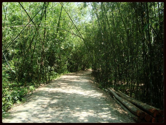 Country Roads Bamboo Forest Jessore
