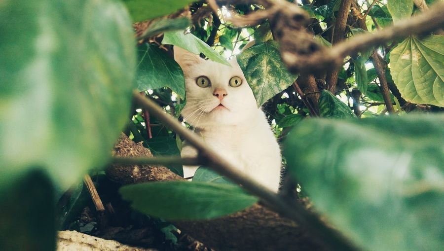Portrait Of Cat Relaxing On Tree