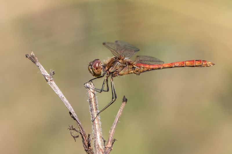 dragonfly Insect Animal Invertebrate Animals In The Wild Animal Themes Animal Wildlife One Animal Close-up Nature Plant Dragonfly Beauty In Nature