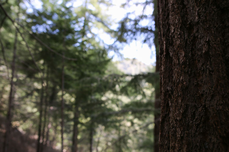 Beauty In Nature Close-up Day Focus On Foreground Forest Growth Nature No People Outdoors Tree Tree Trunk