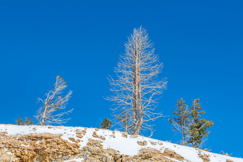 Low angle view of frozen plant against blue sky