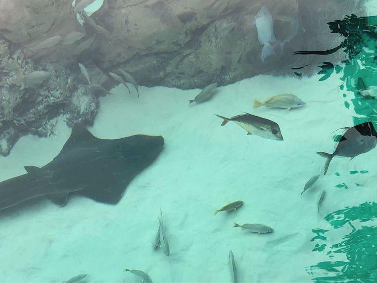 Swim Fish Underwater Stingray Animals In The Wild Sea Life Animal Themes Large Group Of Animals Water No People Animal Wildlife Sea Day Mammal Outdoors Swimming Nature UnderSea