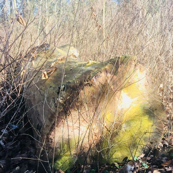 Old trunk Sun And Shadows Dryed Grass Decaying Old Trunk Of Tree Wintertime Nature Growth No People Outdoors Plant Day Tranquility