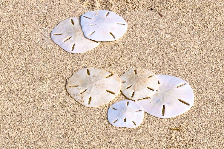 Sand Dollars on