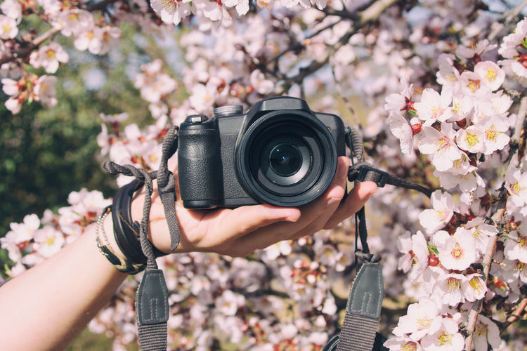 Cropped hand of person holding camera by cherry tree