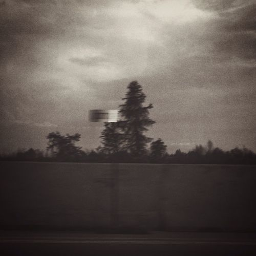 Trees against cloudy sky