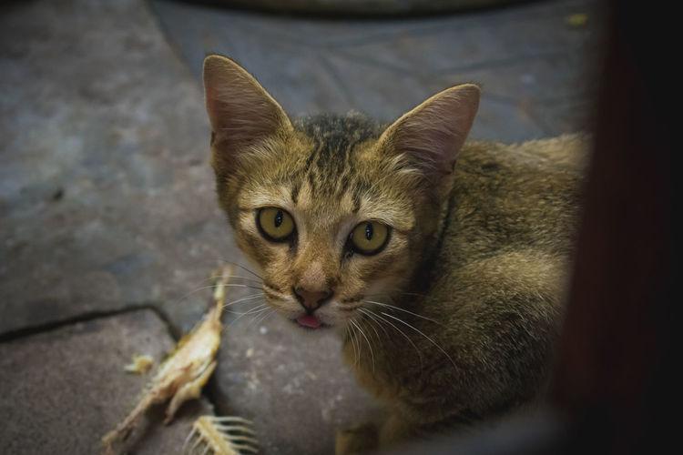 innocent face. Cats Of EyeEm Cats 🐱 Cat Cat Burglar Cat Lovers Cats Catsofinstagram Cat♡