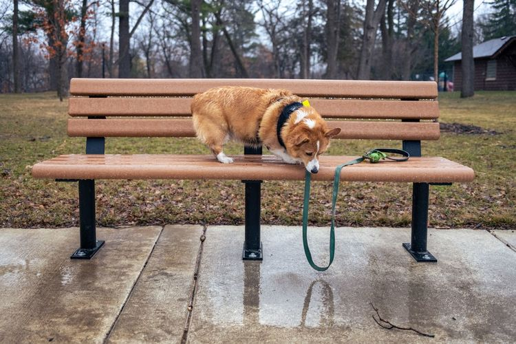 Dog sitting on bench in park