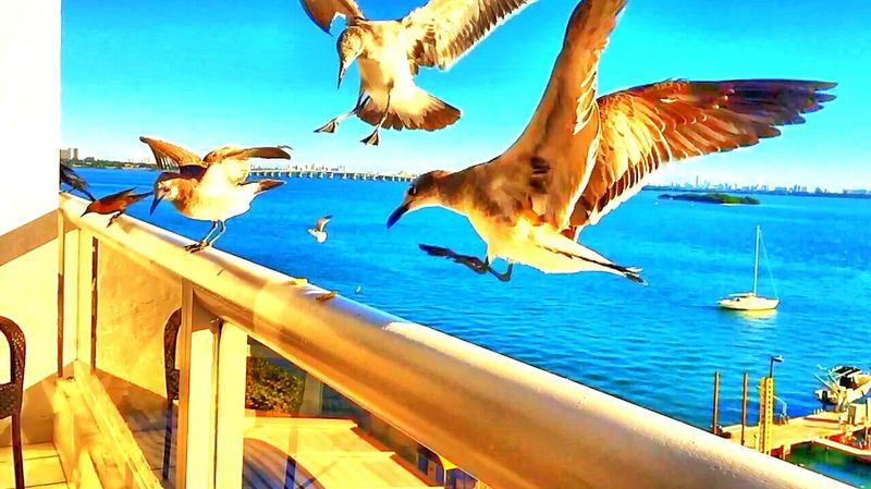 Miami FL🇺🇸☀️4 Birds Enlight HDR Photography Hdr_Collection EyeEm Miami Heaven 🇺🇸☀️FL Usa #igersusa #ig_unitedstates #rockin_shotz #just_unitedstates #insta_crew #gf_usa #nature #rsa_rural #instagramhub #allshots_#world_shooters #insta_america #ig_captures #centralfeed #webstagram #ic_landscapes #wonderful_america #storyofamerica #instagra All_shots #Portrait #Vscocamphotos #Likesforlikes #Photographs #Photographylovers #TopLikeTags #Outdoorphotography #Likesreturned #Silhouette #Likeforlike #Art #Contrast #Landscaped #TagStaGram #love #friends #tagstagram #photooftheday #selfie #amazing #f Tasteofnature #awesome #best #cool #stephiscool #top #topnewfollowers #fantastico #instagram #sound #soundhound #applemusic #digital #model #beautiful #photos #photography #amazing #usa #socialmedia #social #nature #street #streetart #instagram #video #vi EyeEmBestPics