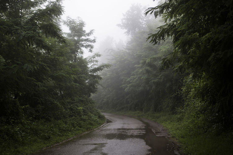 Road amidst trees in forest during rainy season