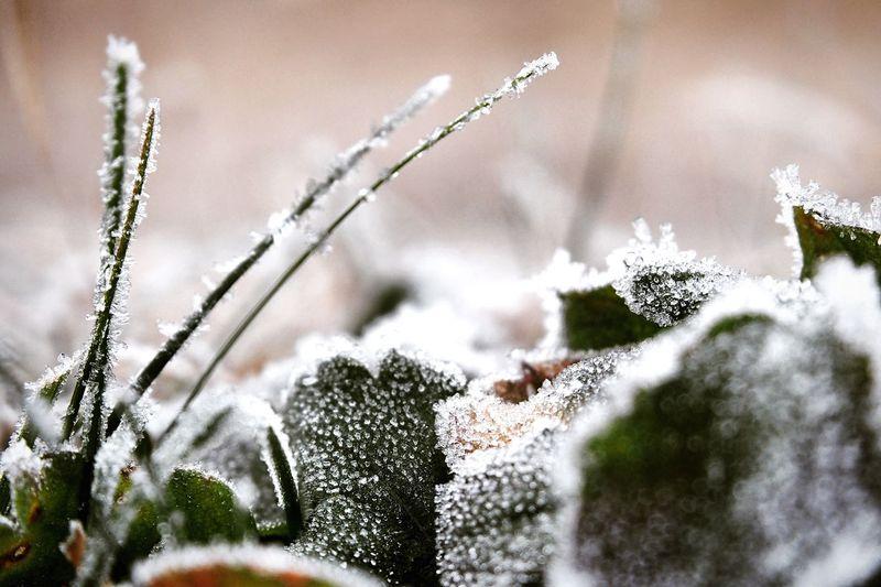 凍りついた朝 朝の風景 First Eyeem Photo