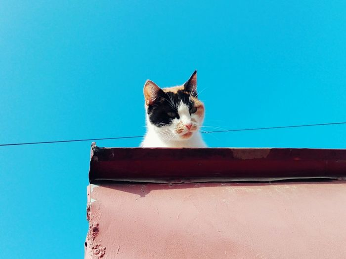 Portrait of cat by wall against blue sky
