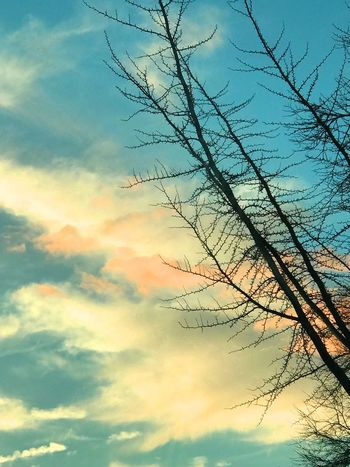 Sky Nature Cloud - Sky Sunset Beauty In Nature Bare Tree Low Angle View Tranquility No People Silhouette Scenics Awe Outdoors Tranquil Scene Branch Tree Day Queens