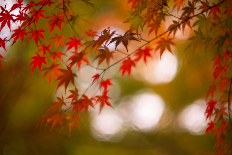 Red Leaves On Branches During Autumn