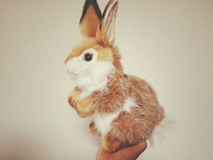 Bunny  Stuffy Bunny Stuffy