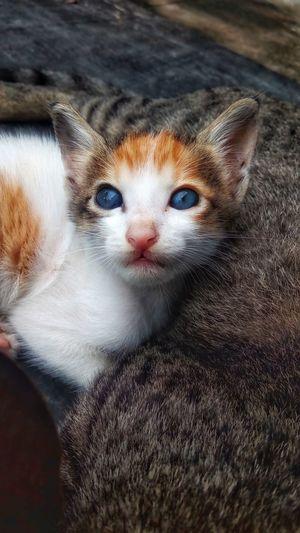 Blue eyes 😍😍