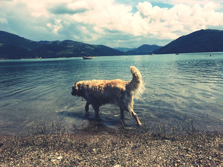EyeEm Selects Mountain Sky Animal Themes Water Domestic Animals Nature One Animal Outdoors Cloud - Sky No People Mountain Range Beauty In Nature Lake Mammal Day Scenics Pet Portraits